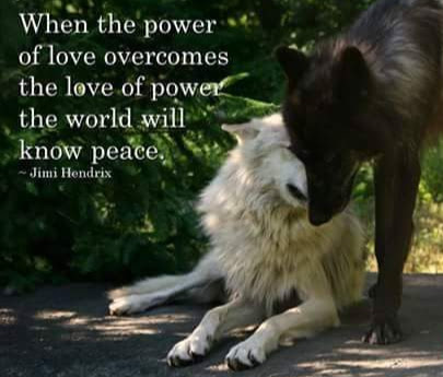 THE GIVING WOLF